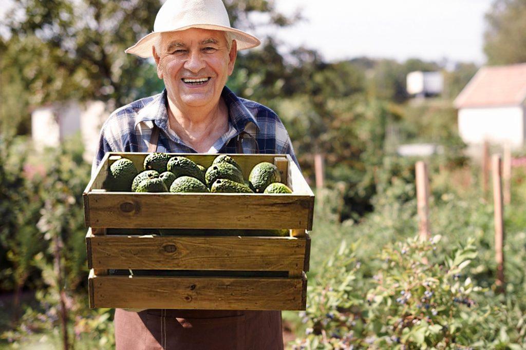 Felipe - trabajador de la finca de avocado Málaga