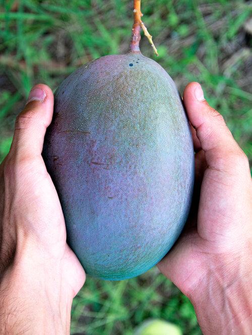 Mains masculines tenant une grande poignée organique